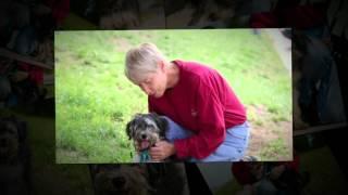 Sheldon The Lhasa Apso Terrier Mix