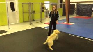 Puppy Training 101: How To Play With Your Dog