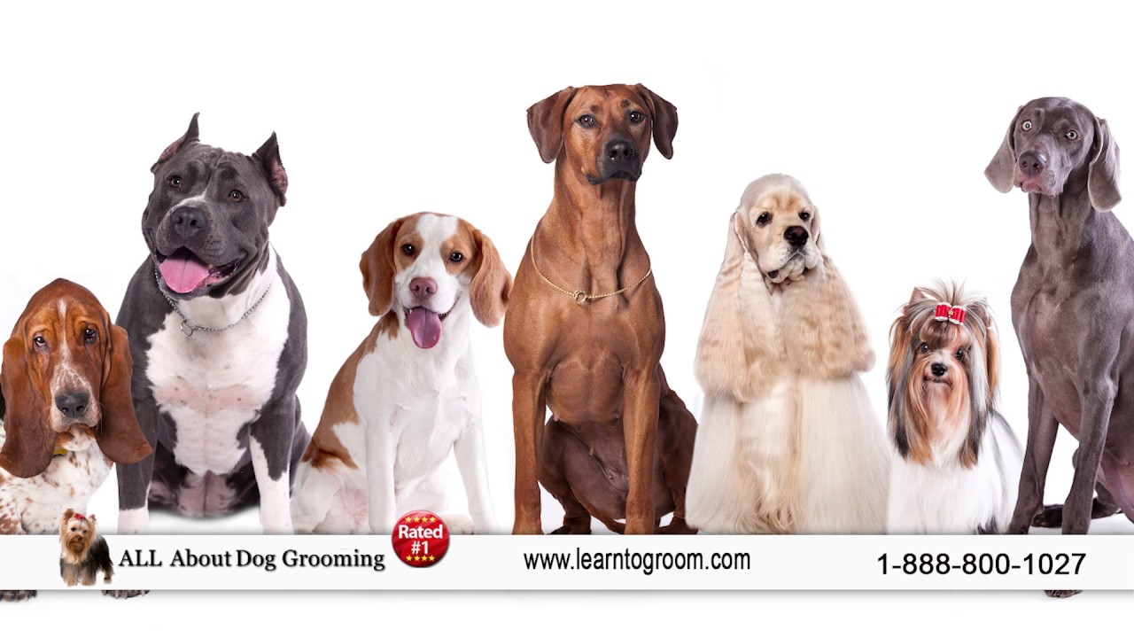 Dog Grooming Schools Training Dog Grooming Course School Youtube