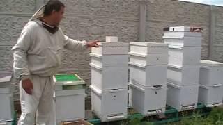 видео Календарь и записки пчеловода 2017