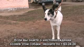 Найдена собака 29.4.13 Вятка Today