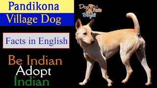 Pandikona Dog Facts in English| Dog and Facts | Indian Dog Breed In English | Dog Facts Bengali