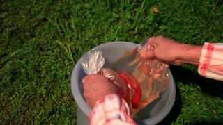 Рыбы в домашнем пруду. Золотые рыбки для дачного водоема