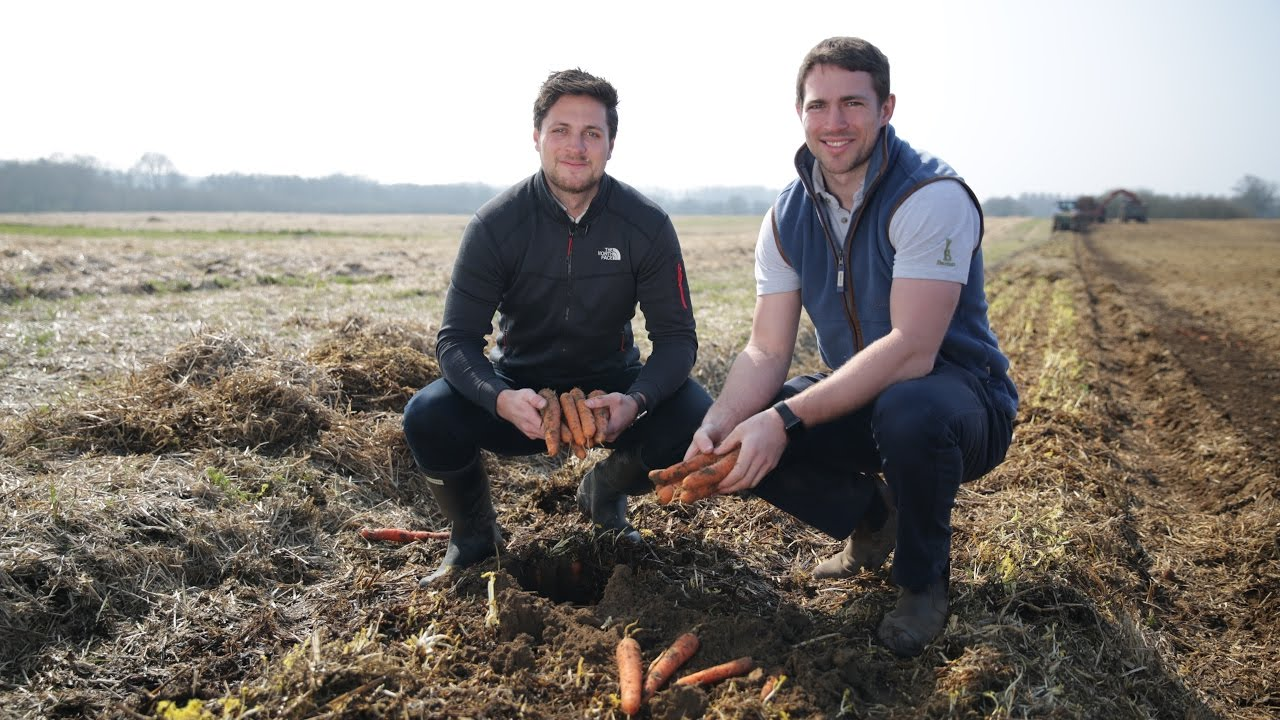 Carrot crop saved from being wasted | Tesco