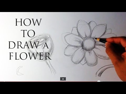 How to Draw a Flower - Easy Drawings - YouTube