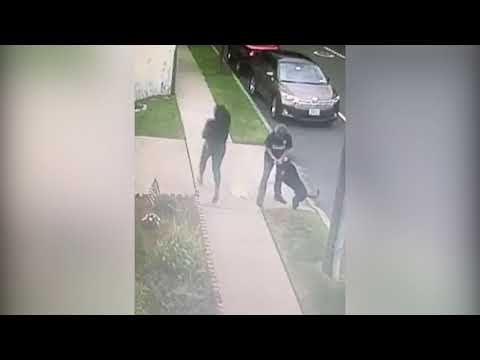 Watch: Video shows pit bull attack on woman, Chihuahua pups in Sunnyside