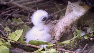 Rare harpy eagle hatches at Zoo Miami
