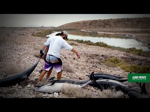 21 dolphins found dead in Mexico