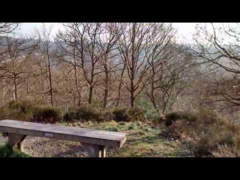 Croham Hurst Woods