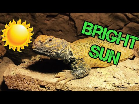 Bright Sun Pour Vos Reptiles