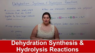 Dehydration Synthesis and Hydrolysis Reactions