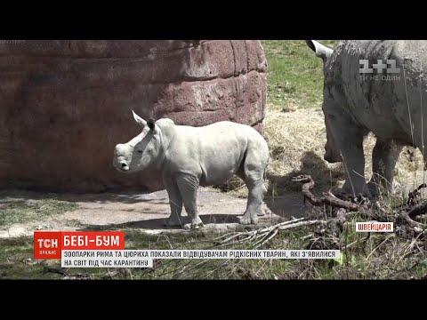 ТСН: Зоопарки Рима та Цюриха показали відвідувачам рідкісних тварин, які народилися під час карантину