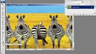 Основы Photoshop. Растровая и векторная графика