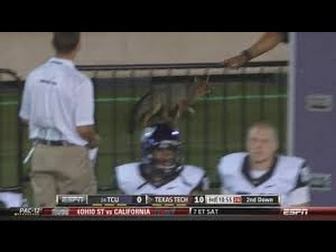 Adorable fox runs around Texas Tech football field, may or may not be good luck