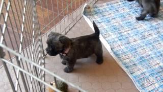 April 19, 2015 Puppy Video