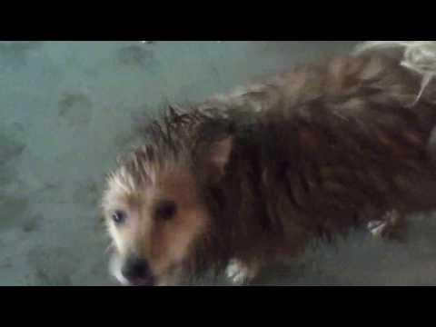 My Dog After a Bath