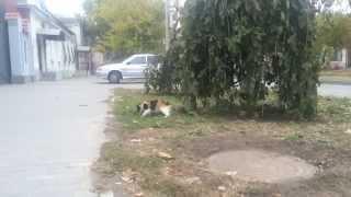 ПЬЯНЫЙ КОТ   The cat drank vodka