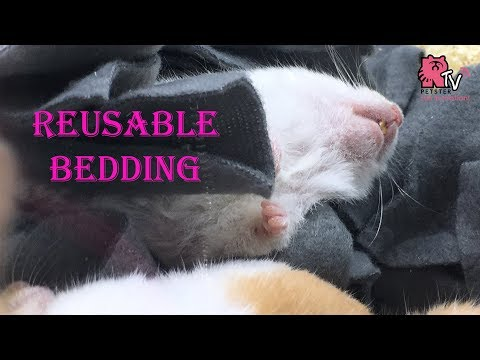 Hamster Bedding - Cost Saving DIY