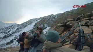 Горная охота Бендерского. Пакистан. Кашмирский мархур. 2019 год..