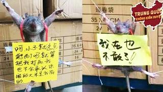 Chú Chuột Này Đã Làm Gì Sai? | Trung Quốc Không Kiểm Duyệt