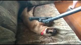 Инструкция как избавиться от шерсти животных