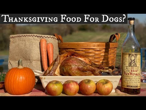 Thanksgiving Food For Dogs? | What is Safe and Appropriate?