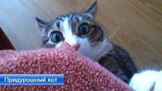 Странный кот (Прикол) Banana Channel(Подпишись на канал: Продажа металлопроката и стали http://metallstroyregion.ru/ Купить металлопрокат с доставкой в Моск..., 2015-06-27T01:52:55.000Z)