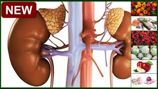 Kidney Disease Diet : Top 10 Foods To Eat For Healthy Kidney and Improve Kidney Function