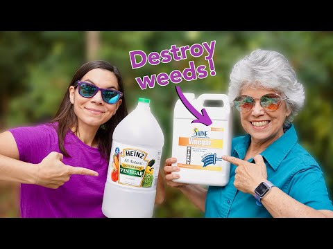 We Tried 30% Natural Vinegar To Kill Weeds