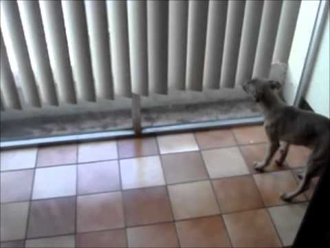 Patsy Puppy With Limping Front Leg Youtube