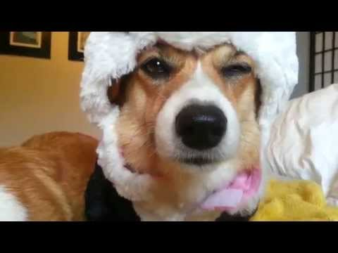 Animal Fail, dog,