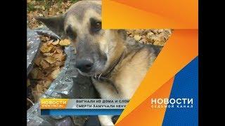 Хозяева бросили избитого пса в лесу и сломали ему лапу. Пес вернулся домой, но умер