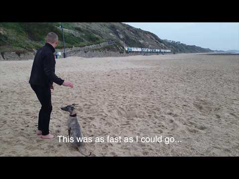 Running race with my Whippet