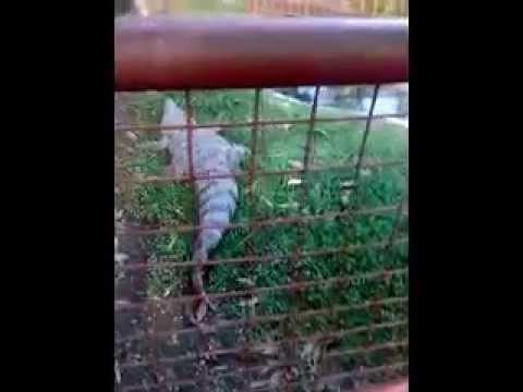 maasin leyte zoo part2