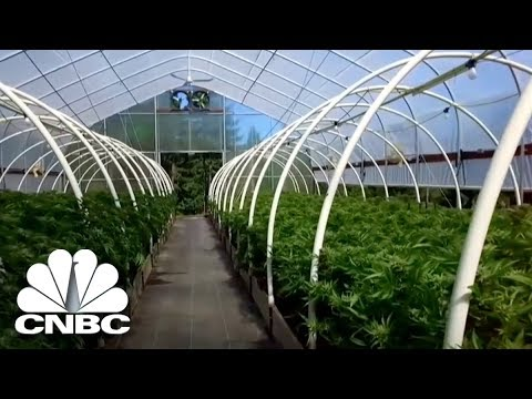 The Profit in Marijuana Country | The Profit | CNBC Prime