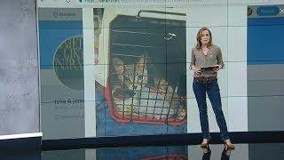 Hilflos im Hurrikan zurückgelassen: Aktivisten retten angeleinte Haustiere