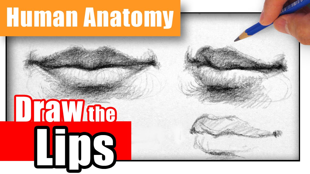 How to Draw the Lips the Easy Way - Different Angles - YouTube