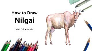 How to Draw a Nilgai with Color Pencils [Time Lapse]