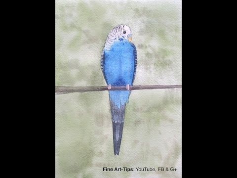 How to Paint a Budgerigar in Watercolor