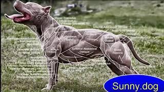 Анализ движения собак. Дог фитнес в домашних условиях