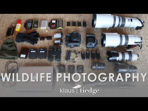 What Gear do you use? | Wildlife Photography with Klaus Tiedge