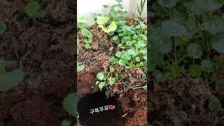 플랜트박스 사용법 How to Use Plantbox
