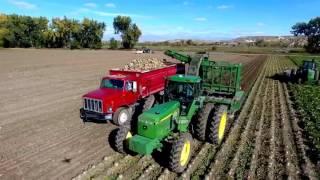 John Deere Tractors Harvesting Sugar Beets in Montana