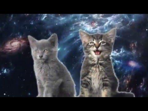 Коты поют видео ::