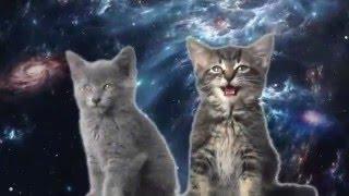 Поющие котята, я в шоке!