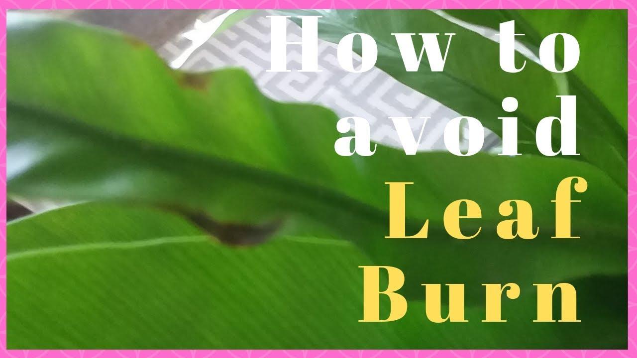 Direct Sunlight Can Burn indoor Plants - YouTube
