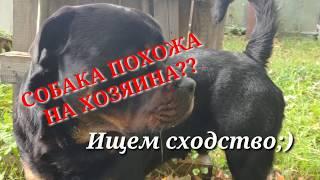 СОБАКА ПОХОЖА НА ХОЗЯИНА??ИЩЕМ СХОДСТВО :)Воспитание собаки без дрессировки