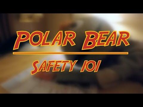Polar Bear safety 101