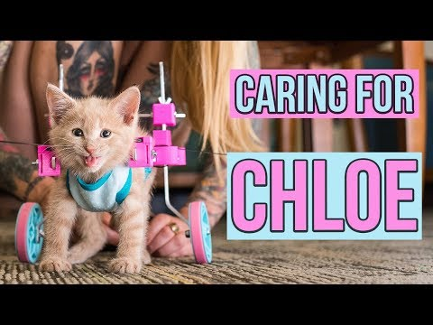 Caring for a Paralyzed Kitten, Chloe UPDATE!