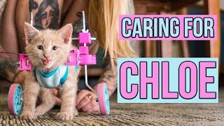 Caring for a Paralyzed Kitten, Chloe (UPDATE!) thumbnail
